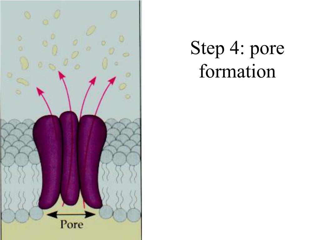 Step 4: pore formation