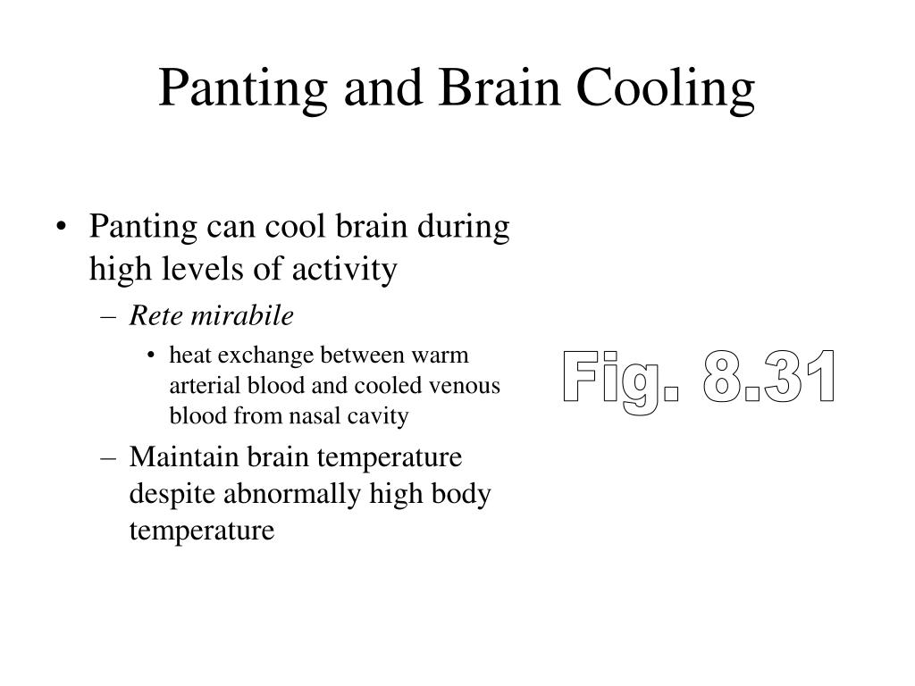 Panting and Brain Cooling