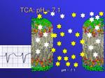 tca ph 7 1