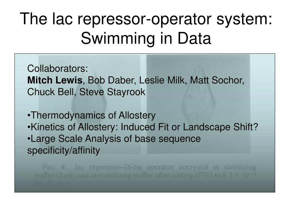 the lac repressor operator system swimming in data l.