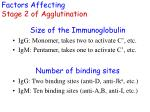 factors affecting stage 2 of agglutination