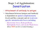 stage 1 of agglutination sensitization