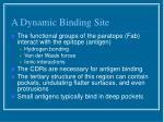 a dynamic binding site