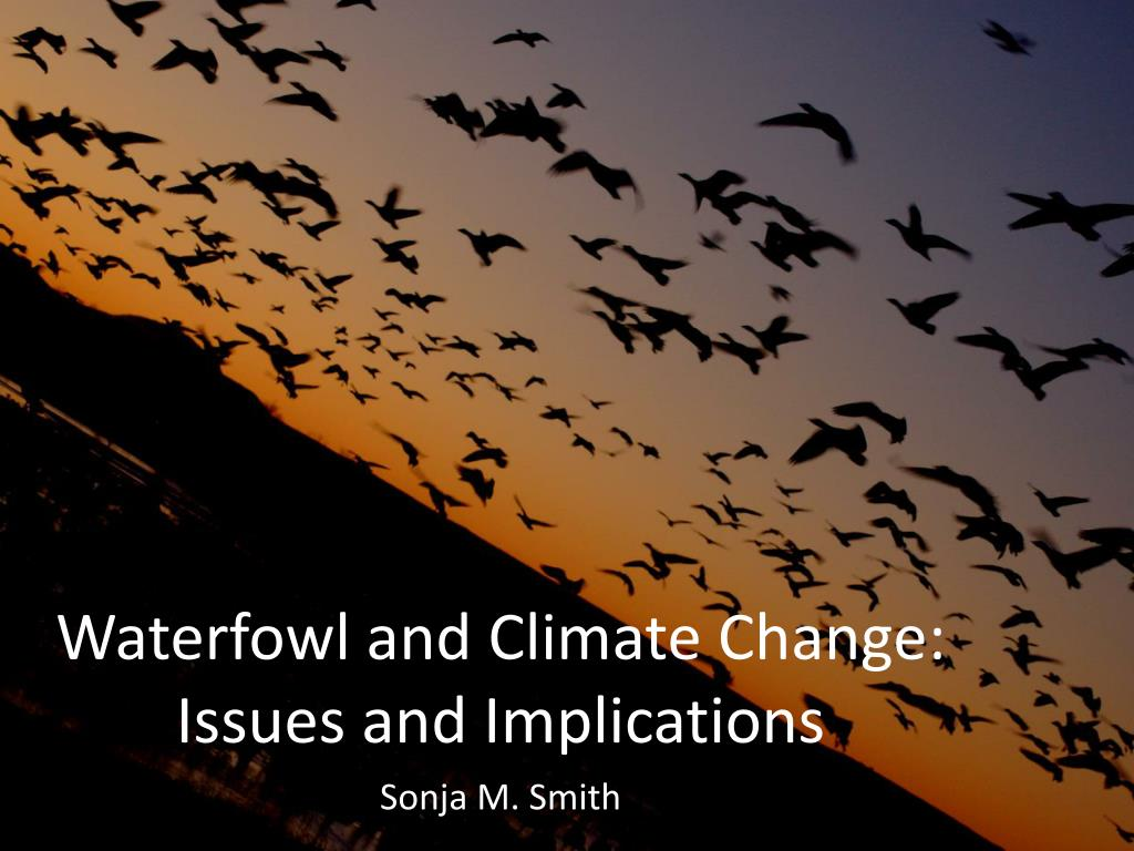 waterfowl and climate change issues and implications l.