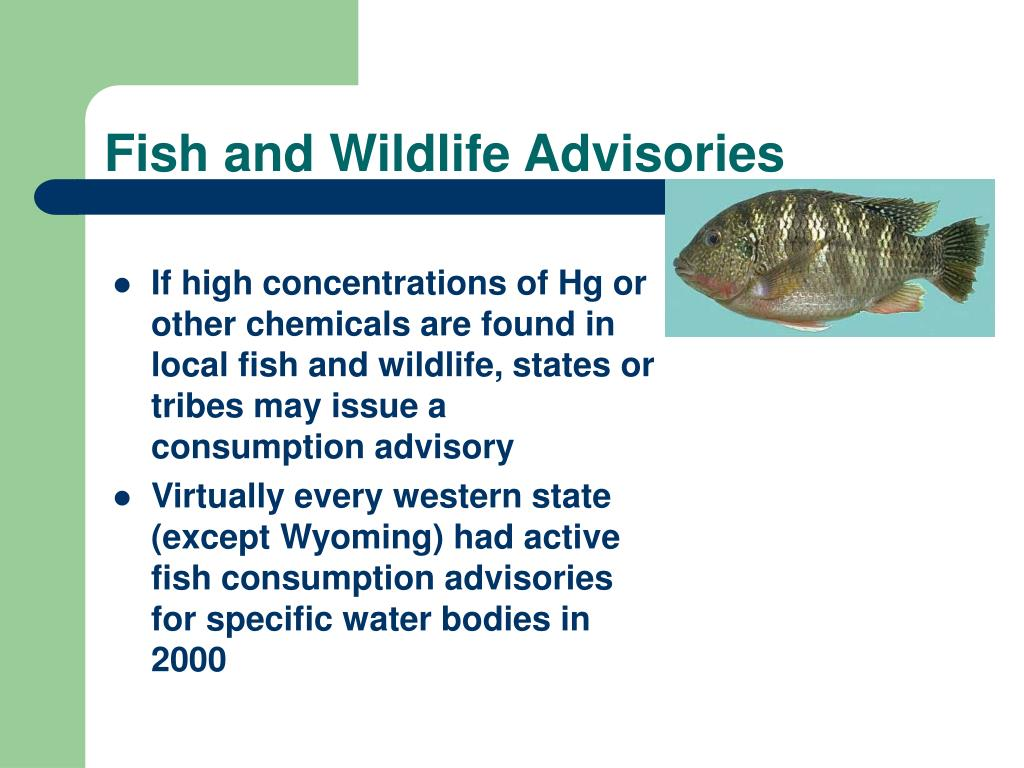 Fish and Wildlife Advisories