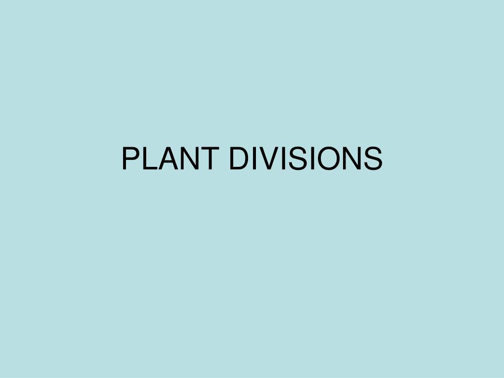 plant divisions l.