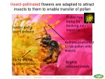 insect pollinated flowers are adapted to attract insects to them to enable transfer of pollen