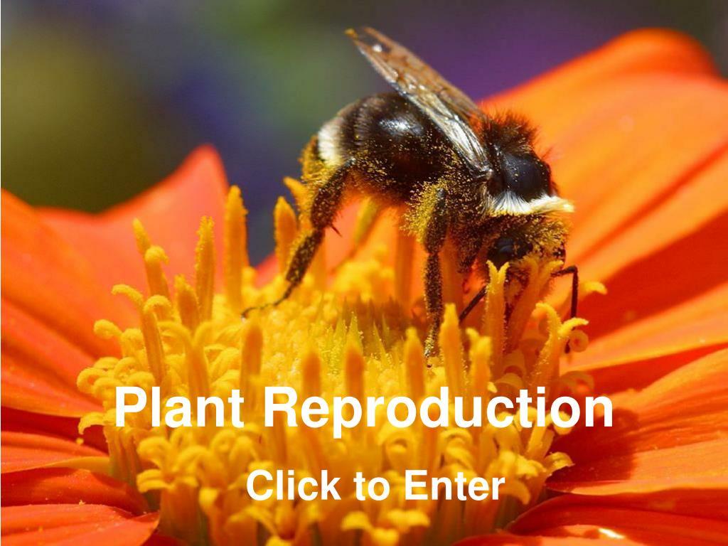 plant reproduction l.