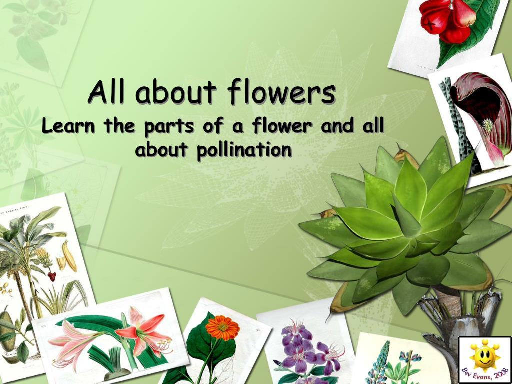 all about flowers l.