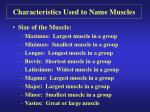 characteristics used to name muscles9
