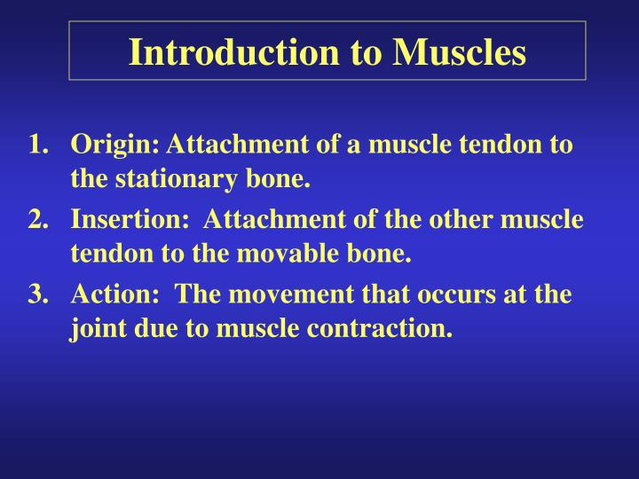 introduction to muscles n.