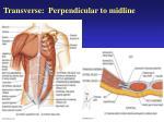 transverse perpendicular to midline