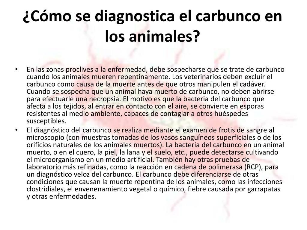 ¿Cómo se diagnostica el carbunco en los animales?