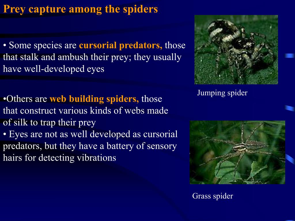 Prey capture among the spiders