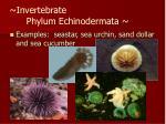 invertebrate phylum echinodermata37