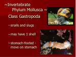 invertebrate phylum mollusca28