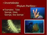 invertebrate phylum porifera17