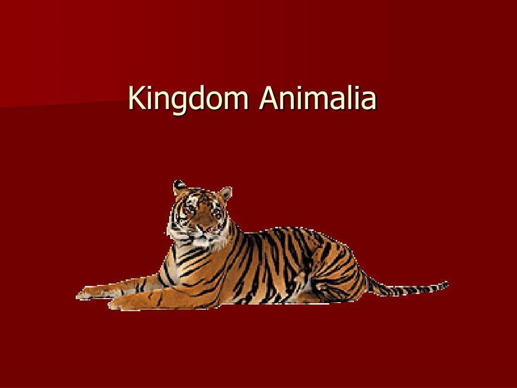 kingdom animalia l.