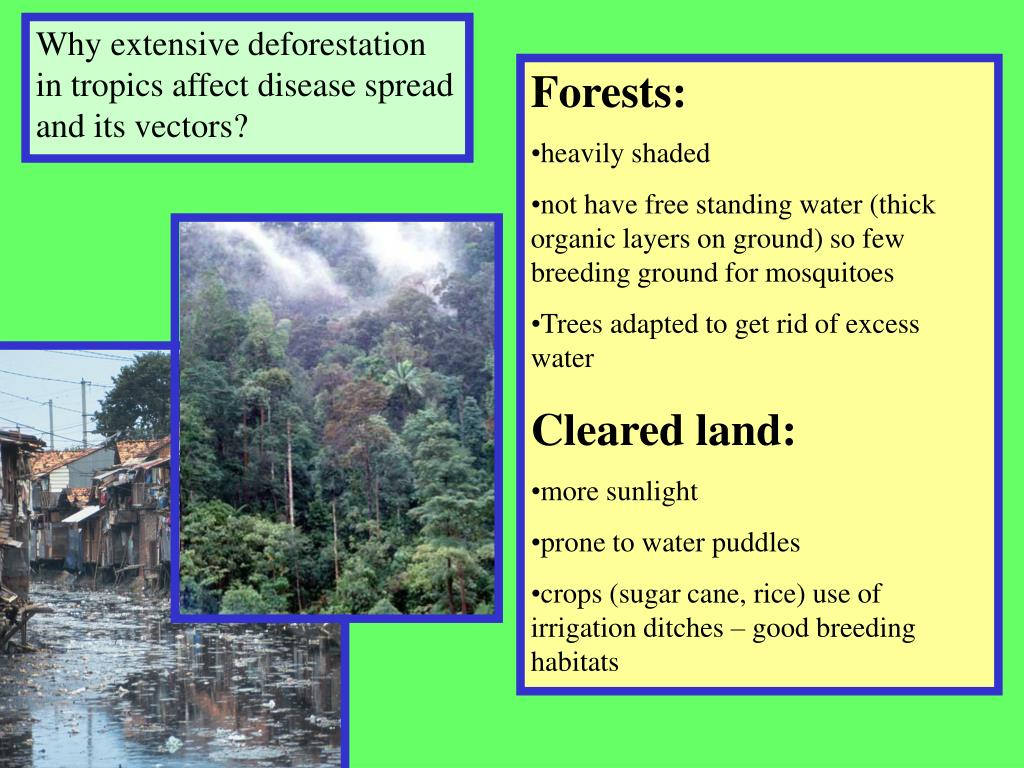 Why extensive deforestation in tropics affect disease spread and its vectors?