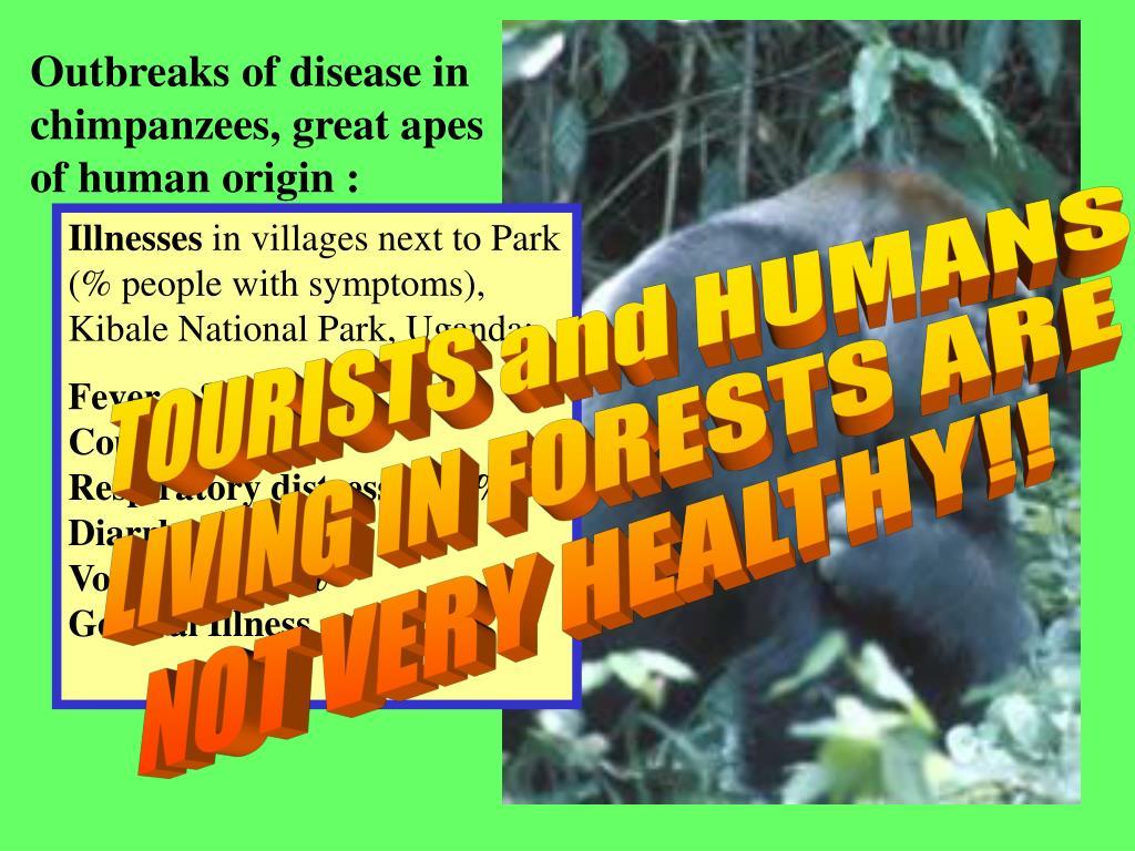 Outbreaks of disease in chimpanzees, great apes of human origin :