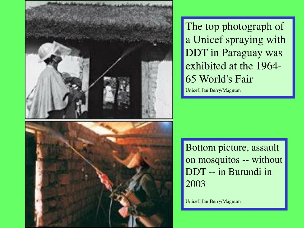 The top photograph of a Unicef spraying with DDT in Paraguay was exhibited at the 1964-65 World's Fair