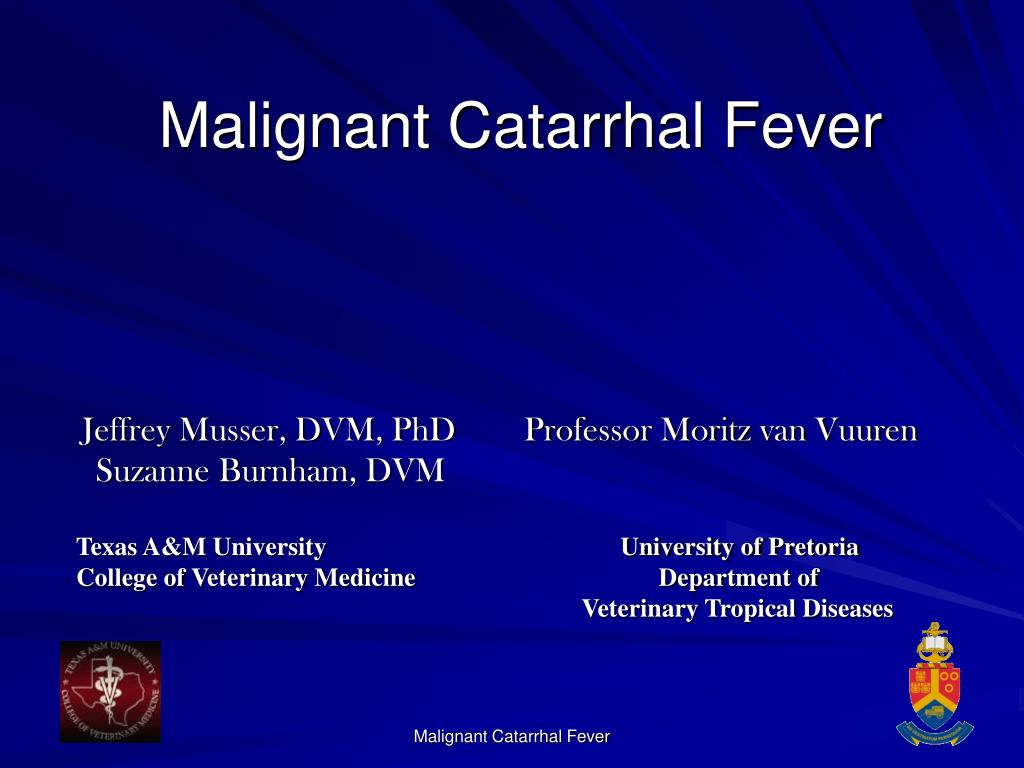 malignant catarrhal fever l.