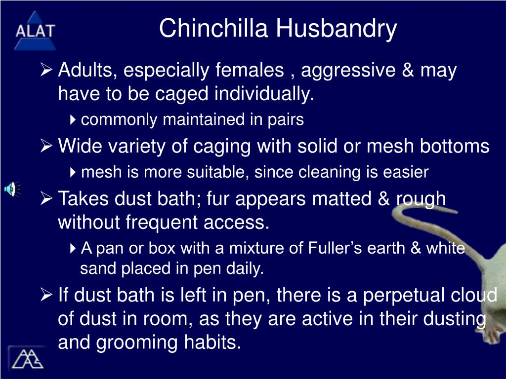Chinchilla Husbandry