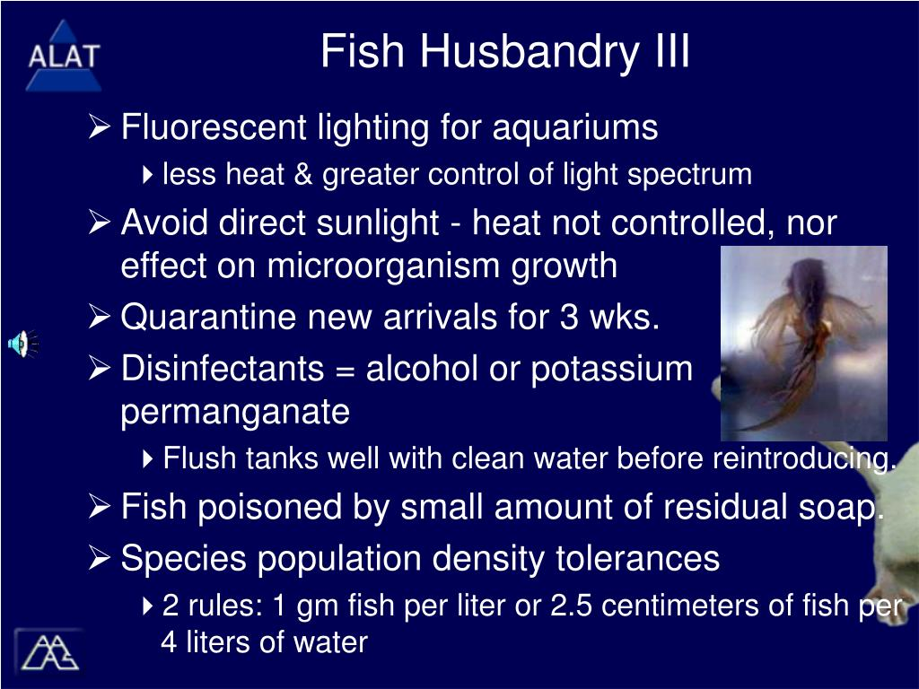 Fish Husbandry III