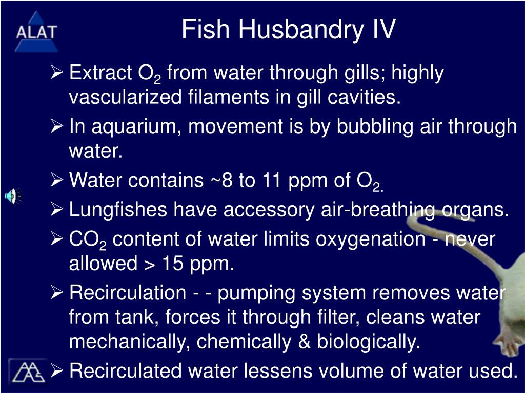 Fish Husbandry IV