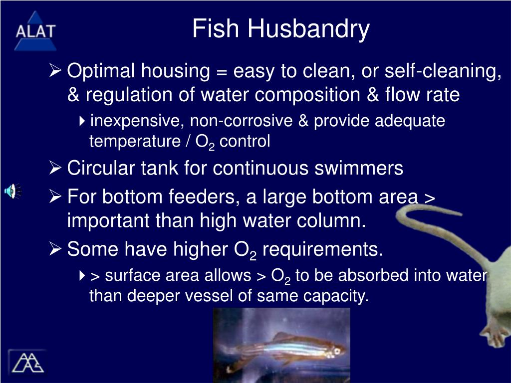 Fish Husbandry