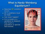 what is hardy weinberg equilibrium