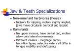 jaw teeth specializations