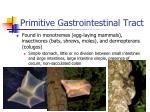 primitive gastrointestinal tract