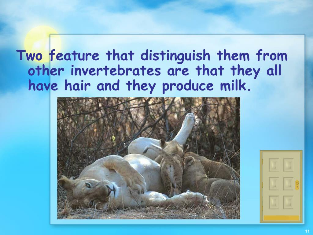 Two feature that distinguish them from other invertebrates are that they all have hair and they produce milk.