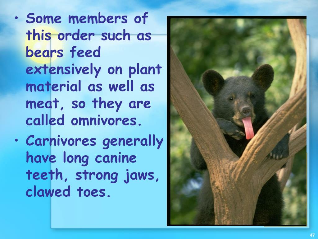 Some members of this order such as bears feed extensively on plant material as well as meat, so they are called omnivores.