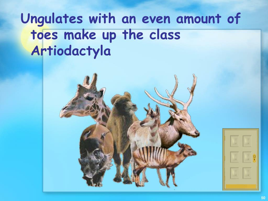 Ungulates with an even amount of toes make up the class Artiodactyla