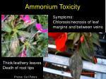 ammonium toxicity