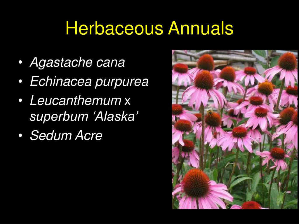 Herbaceous Annuals