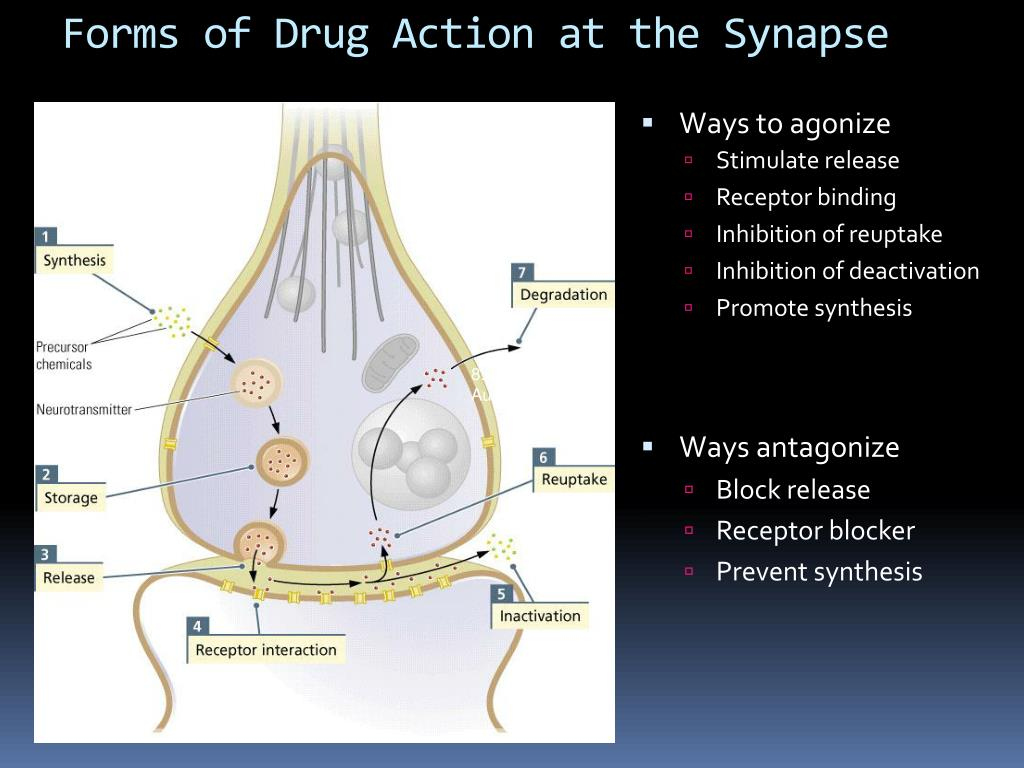 Forms of Drug Action at the Synapse