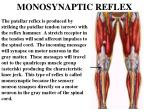 monosynaptic reflex