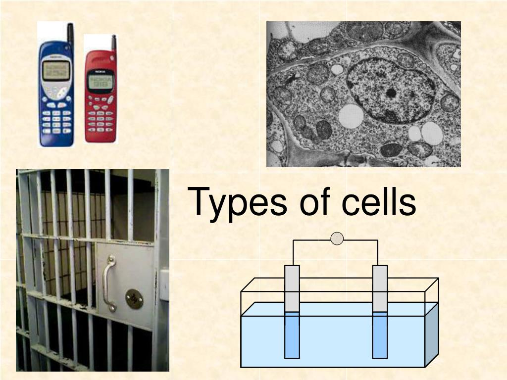 types of cells l.