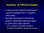anatomy of mitral annulus