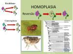 homoplasia45