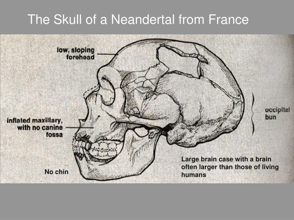 La Chappelle Skull