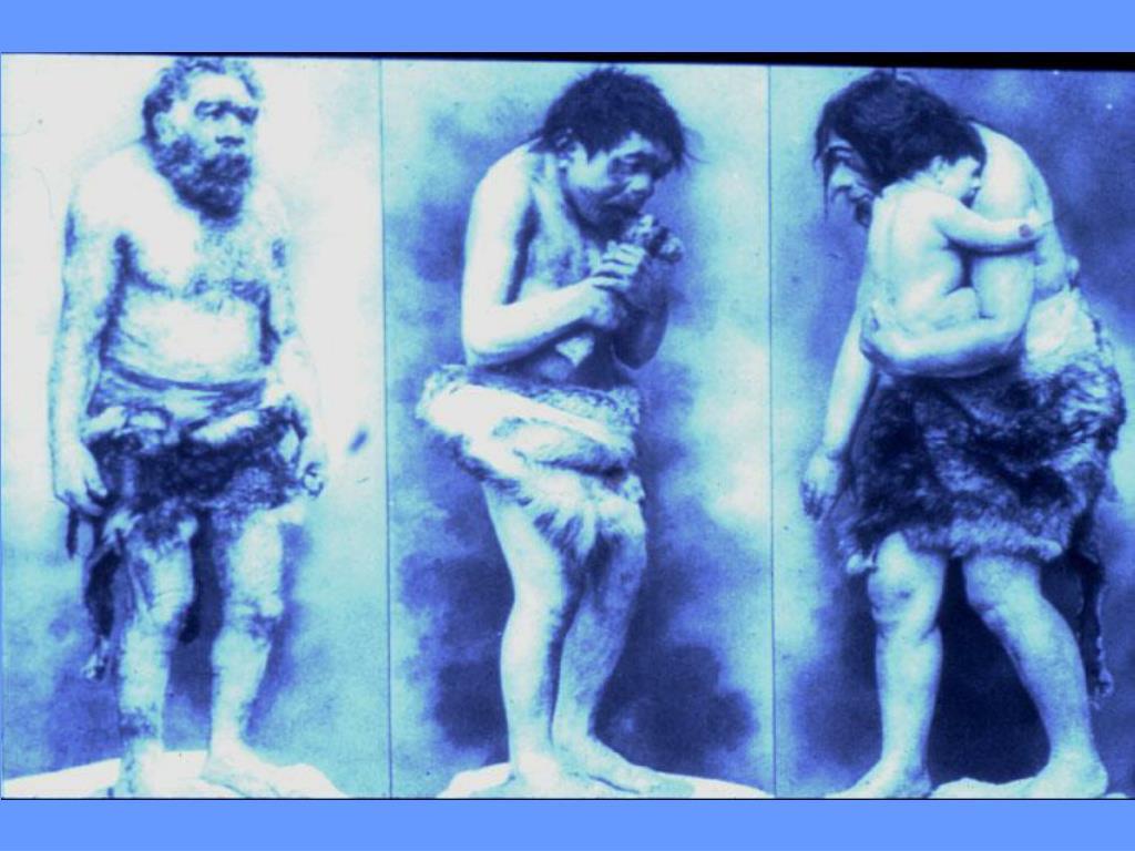 Pity neandertal