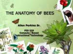 the anatomy of bees