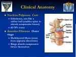 clinical anatomy27