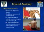 clinical anatomy36