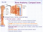 bone anatomy compact bone