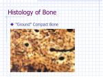 histology of bone